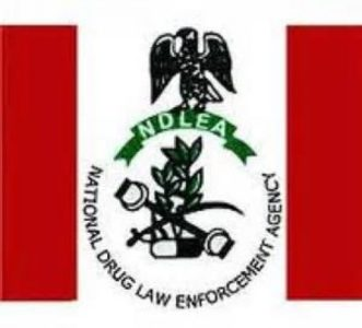247 suspects arrested in Ebonyi in 2020 — NDLEA